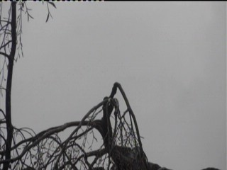 Webcam mit Blick auf ein Storchennest in Isny